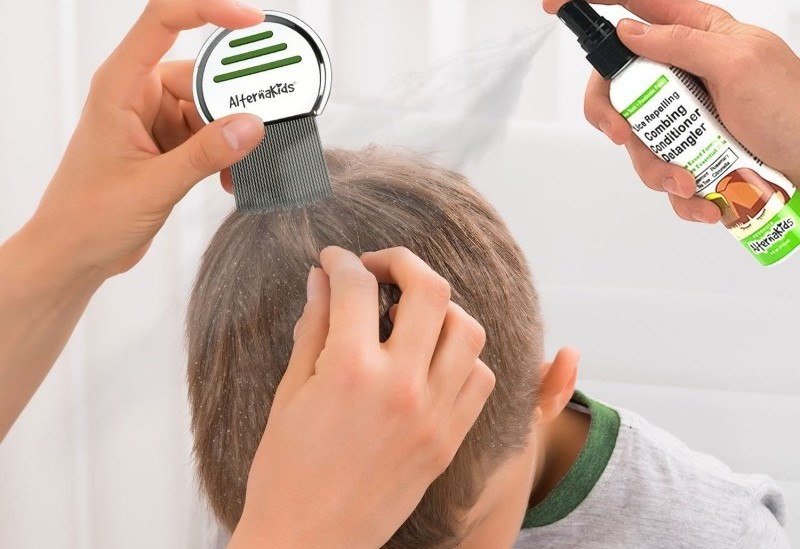 Живут ли вши на окрашенных волосах, убивает ли краска паразитов?