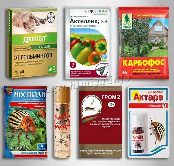 Как избавиться от мошек в комнатных цветах? средства для борьбы с мошками в земле комнатных растений. как вывести насекомых в домашних условиях?