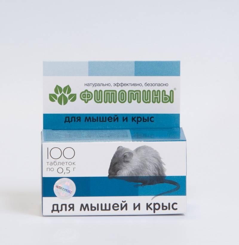 Эффективные покупные яды и самодельные отравы для крыс