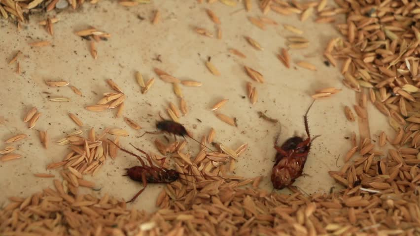 Где обитают тараканы