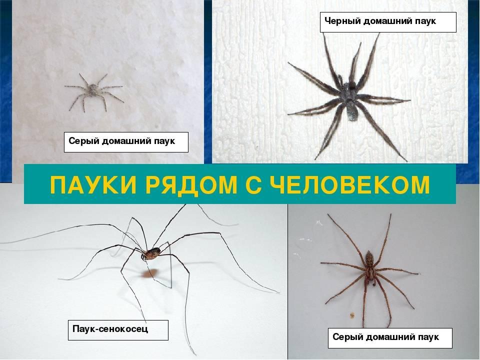 Можно ли убивать пауков в доме? способы избавиться от проблемы