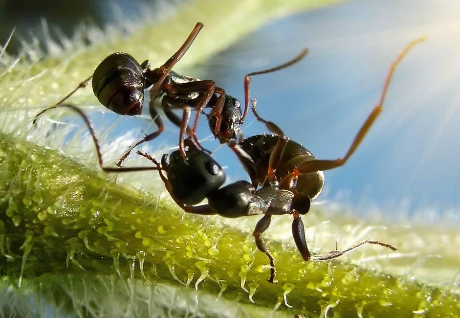 Где и как зимуют муравьи