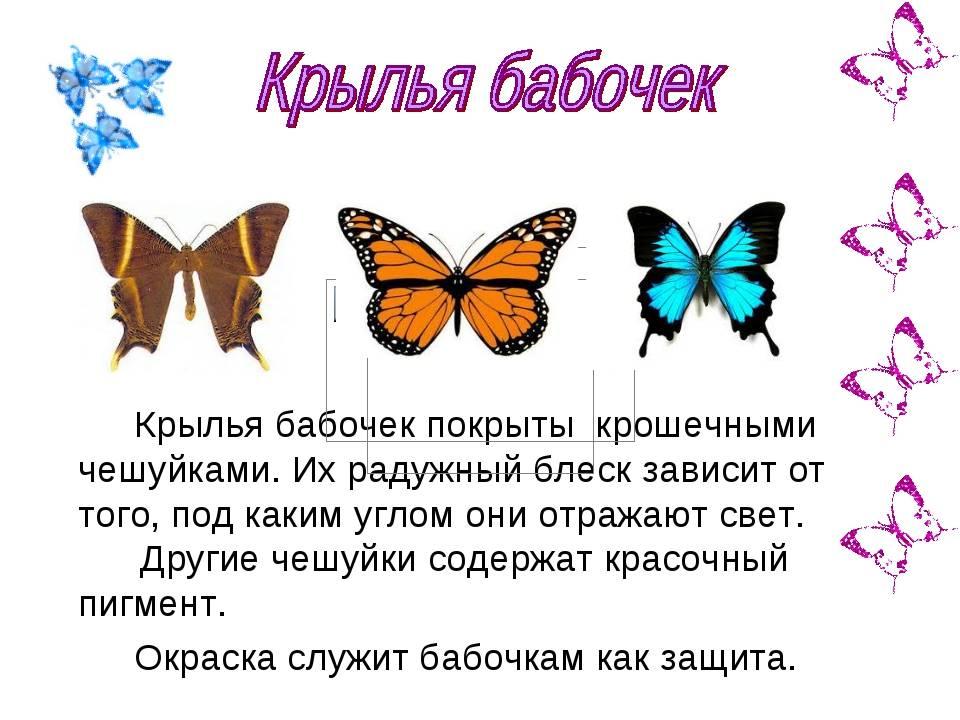 Протез бабочка на один зуб: цена, отзывы