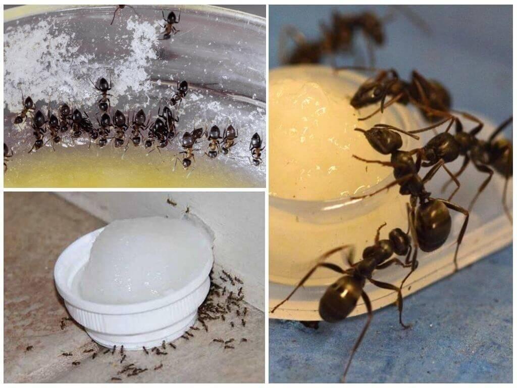 10 способов, как избавиться от муравьев в машине: что делать, если появились