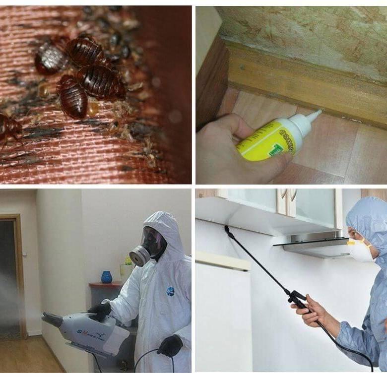 Обработка помещения от крыс и мышей: профессиональные и народные средства, ловушки и дератизация