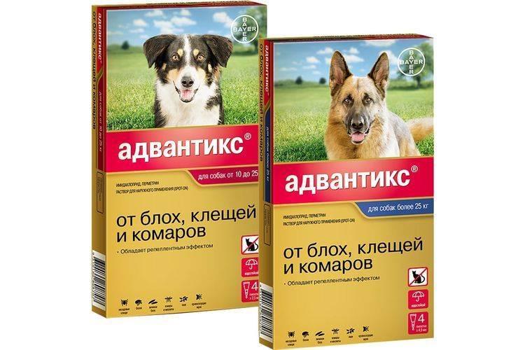 Прививка от клещей для собак — факты и заблуждения