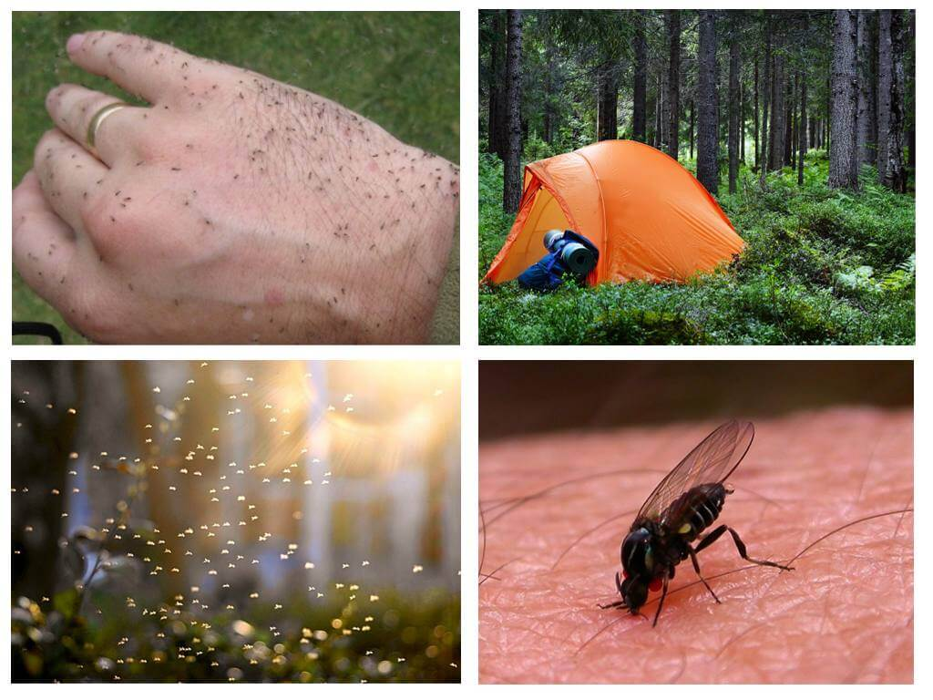 Много комаров в лесу