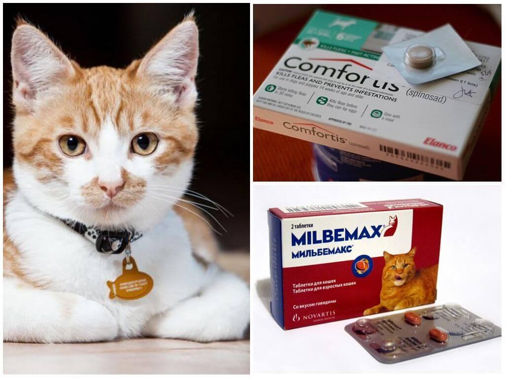 Какие народные средства помогут избавиться от блох у кошек и собак - дегтярное и дустовое мыло, полынь и другие варианты избавления питомцев от паразитов