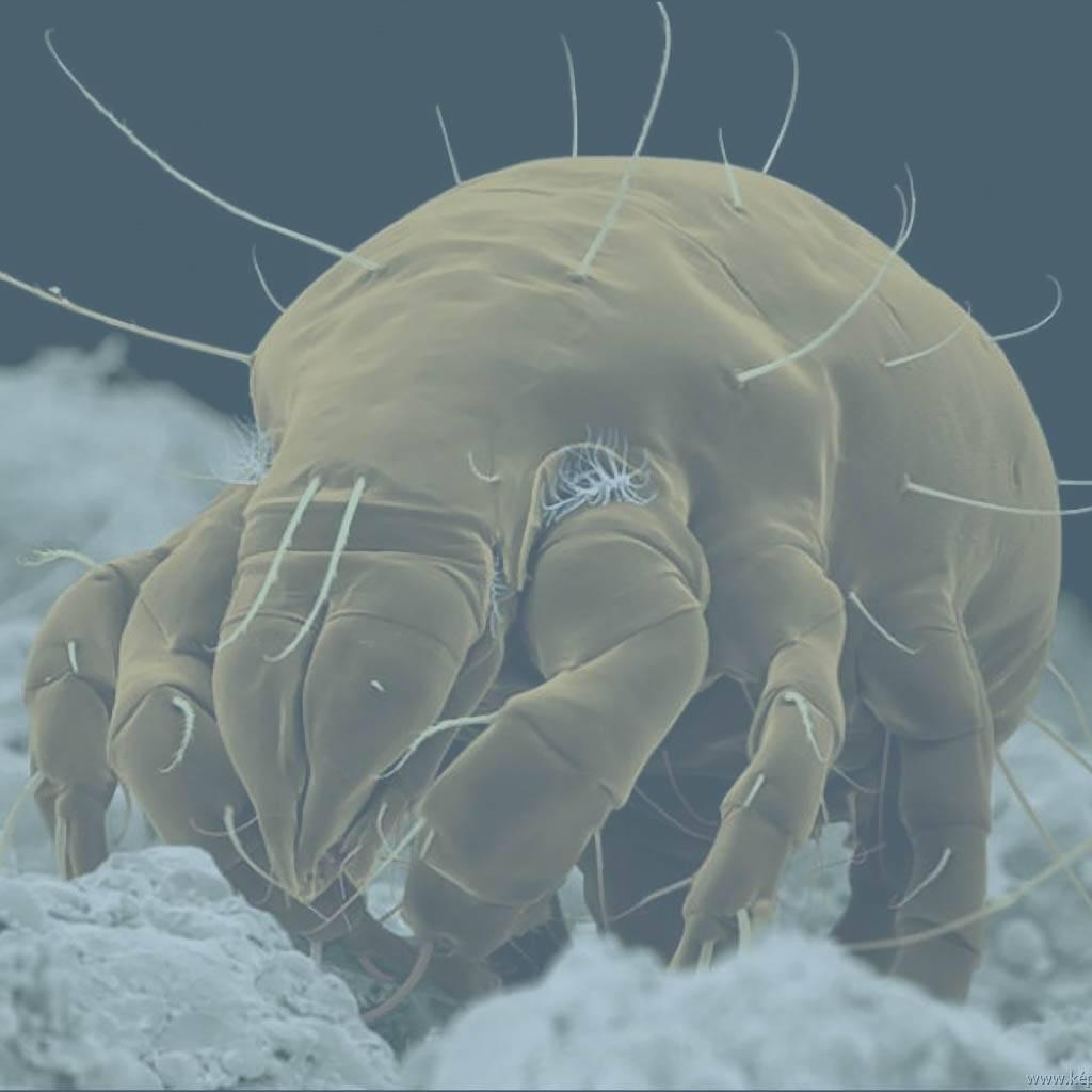 Как избавиться от пылевого клеща: способы эффективного уничтожения пылевых клещей