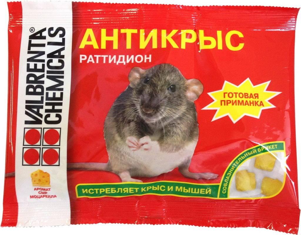 Как избавиться от крыс в курятнике или сарае с помощью ядов, отпугивателей, народных и других средств
