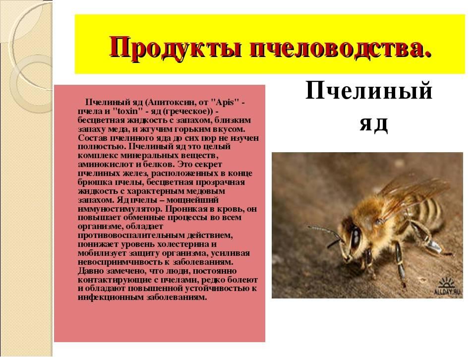 Пчелиный яд (апитоксин): что это, состав, польза и вред, отзывы