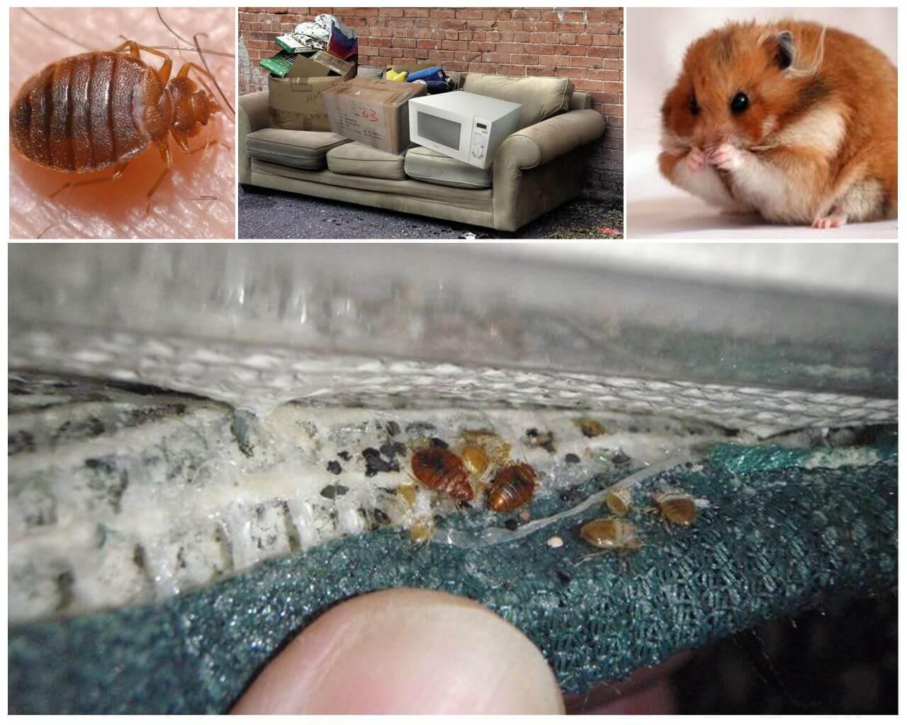 ❶ топ-8 причин от чего заводятся клопы в квартире и что делать в таком случае