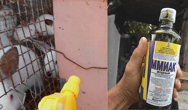 Как защитить кроликов от комаров на улице и в крольчатнике