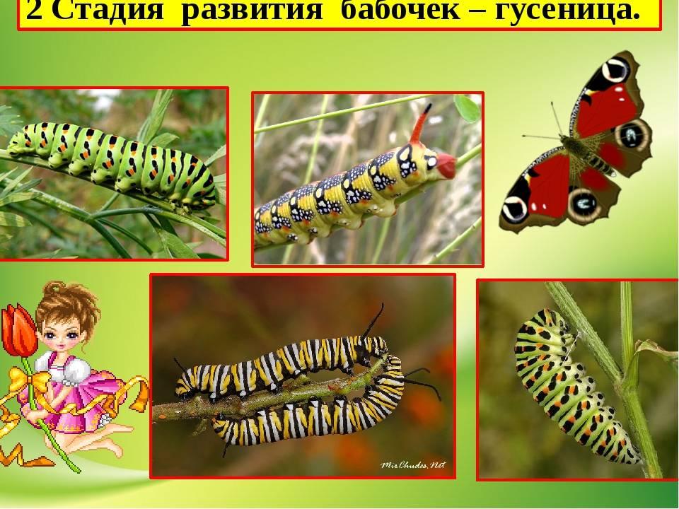 До и после: 19 необыкновенных превращений гусениц в прекрасных бабочек и мотыльков