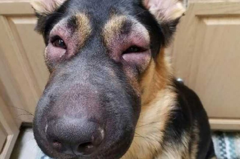 Что делать, если собаку укусила пчела или оса