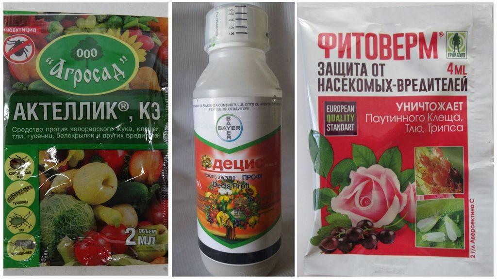Как бороться с белокрылкой в теплице: эффективные препараты и народные средства