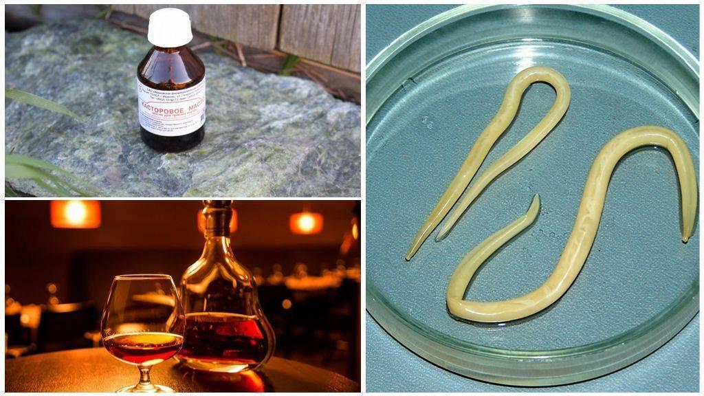Как вывести паразитов из организма   травник