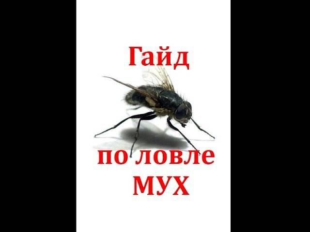 Несколько советов, как побороть нашествие мух