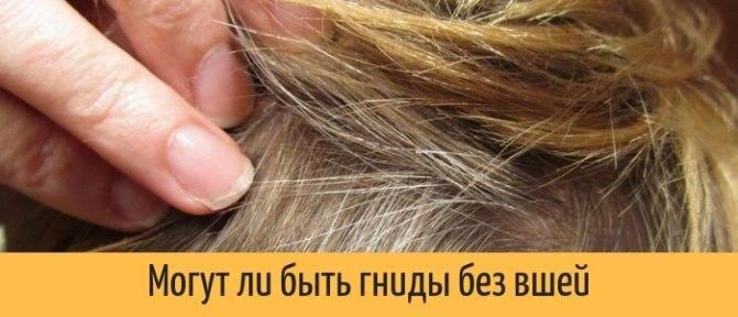 Могут ли вши жить на окрашенных волосах? - cosmetism
