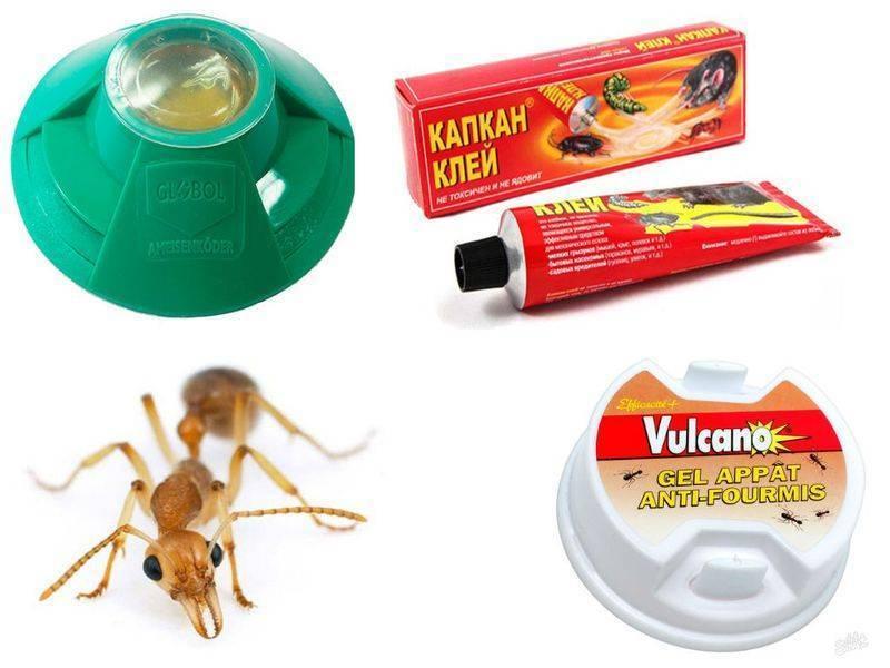 Действенное средство от муравьев в квартире