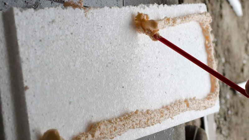 Мыши грызут пенопласт: что делать, чем обработать и как защитить дом?