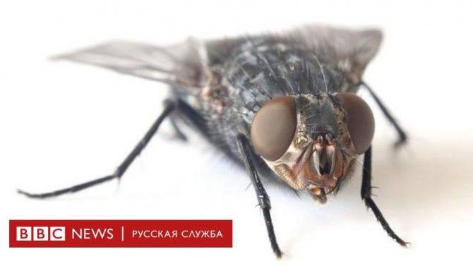 Как убить муху? средства от мух в квартире
