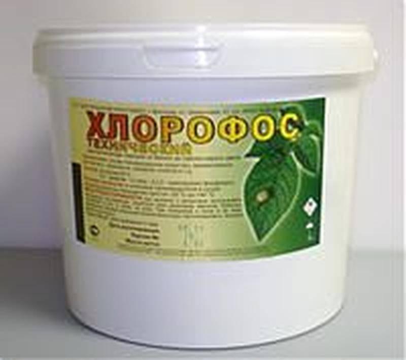 Хлорофос от клопов – быстрая смерть кровососущих паразитов