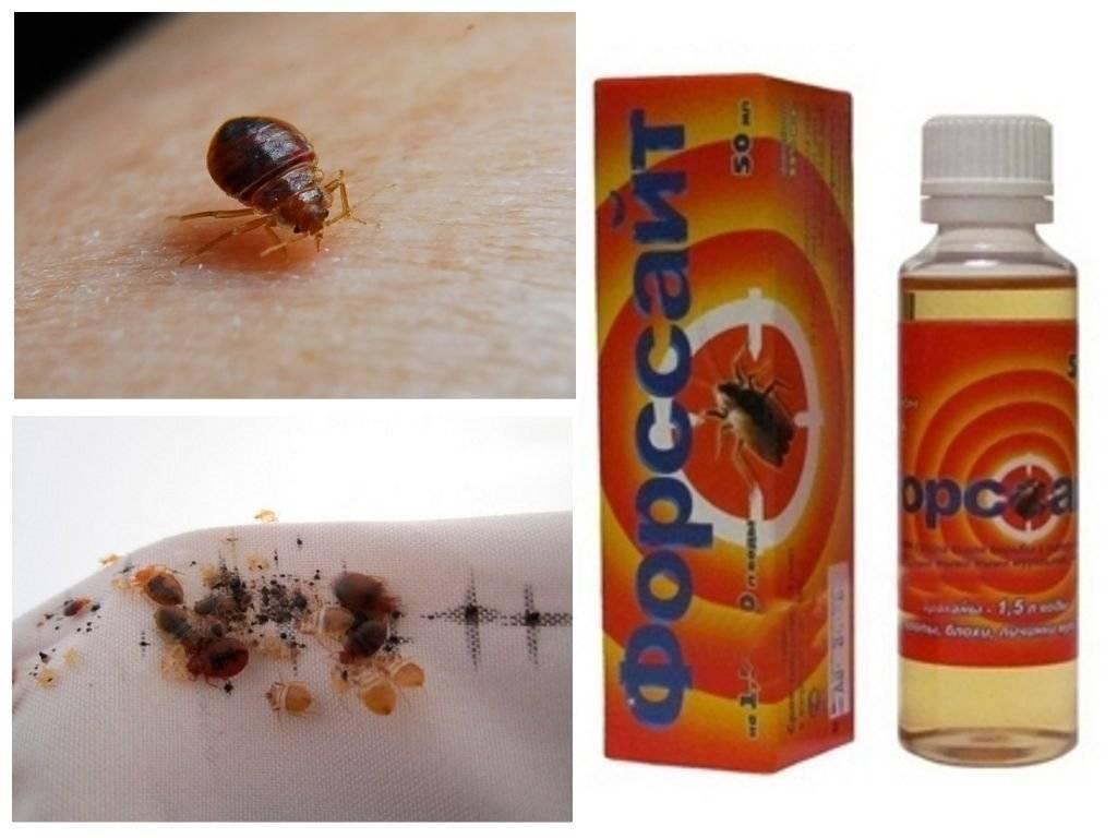 Что больше всего любят тараканы