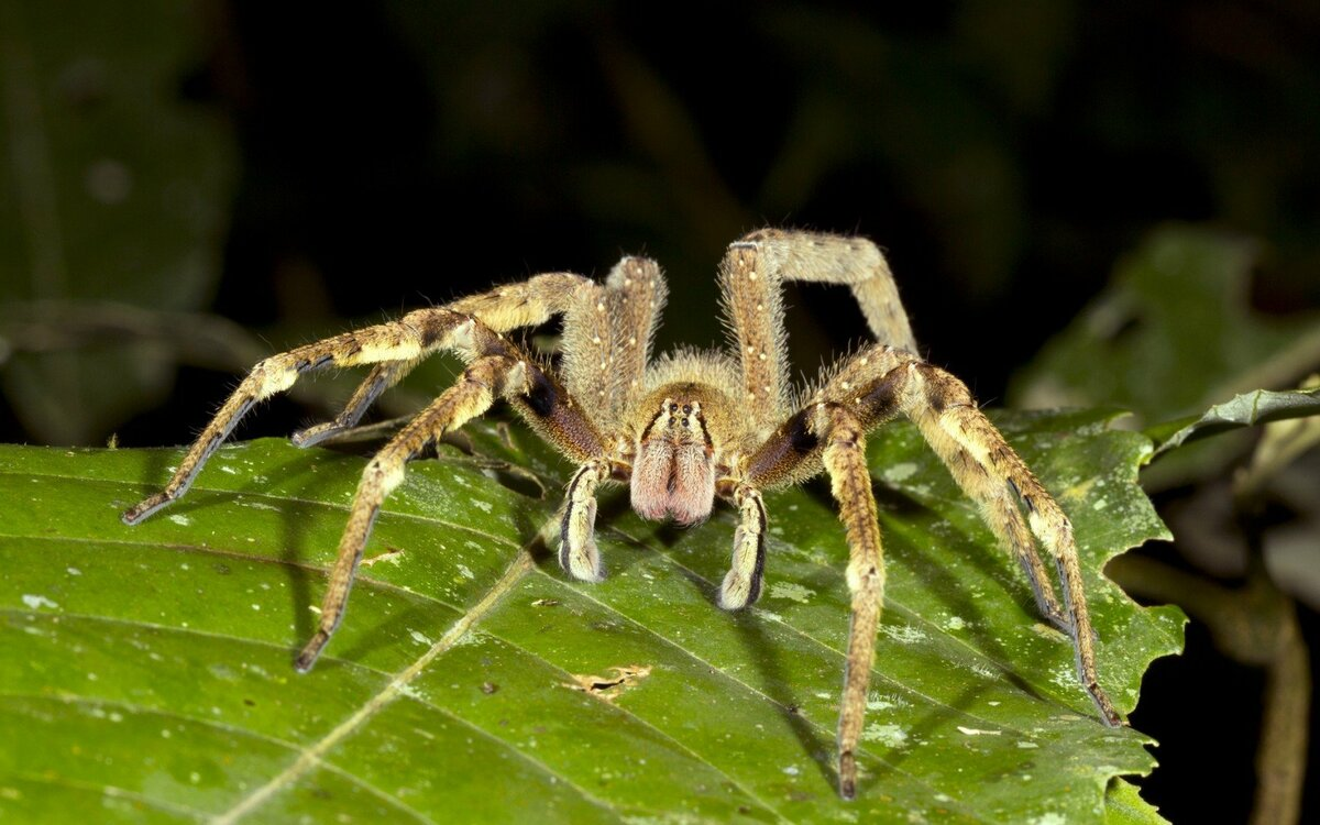 Самые большие пауки в мире – фото и описание