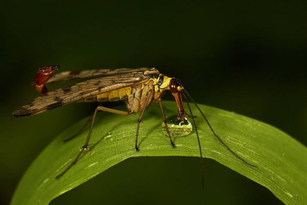 Скорпионы в природе: размножение скорпионов