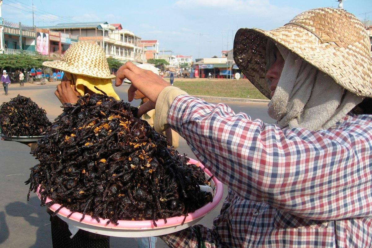 Деликатесы из насекомых в разных странах мира - zefirka