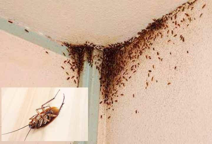 Как избавиться от мышей в квартире: 3 супер способа