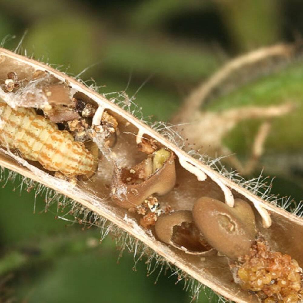 Зерновка широкой и узкой специализации