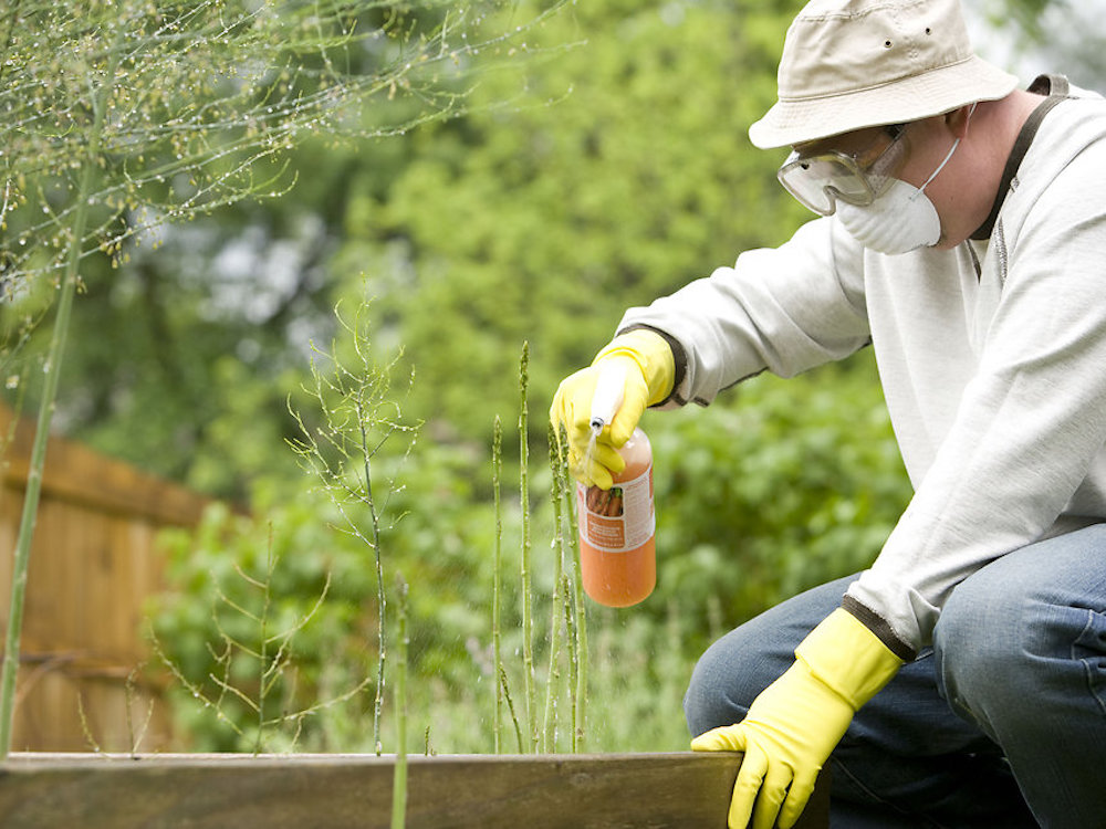 ❶ обработка дачного участка от клещей - как бороться с клещом в саду, в огороде