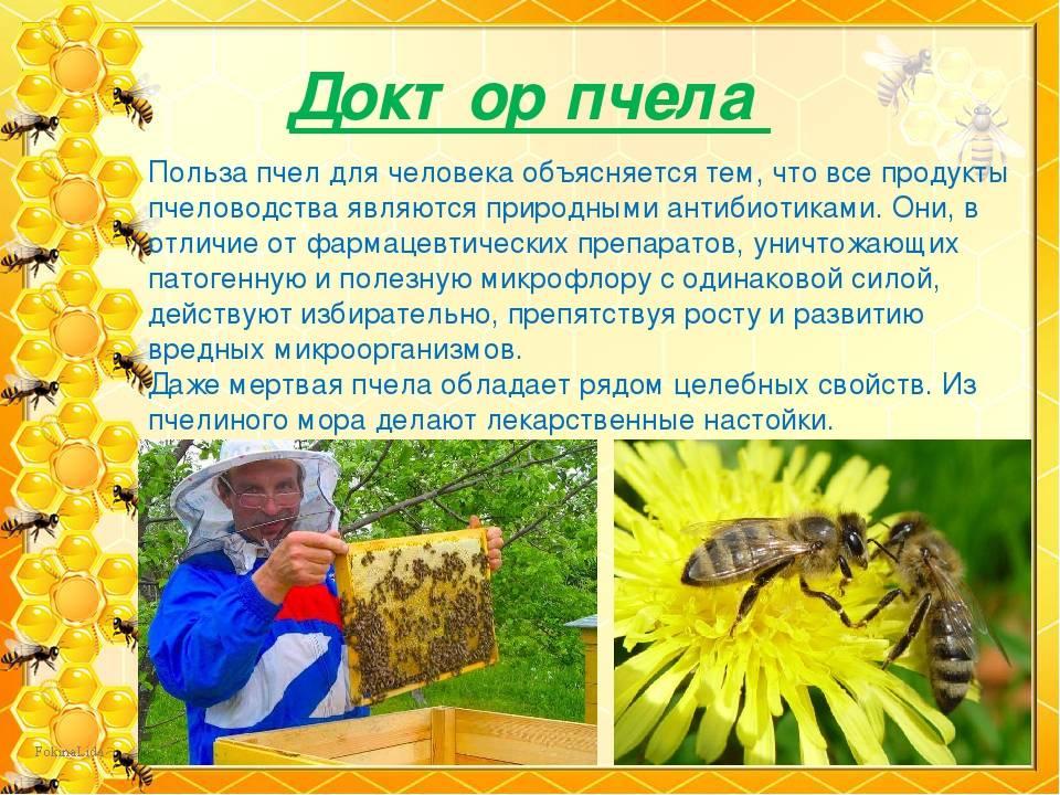 Польза и вред от осы в природе