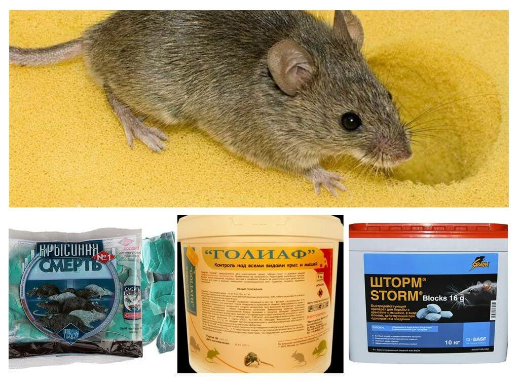 13 лучших отпугивателей мышей и крыс