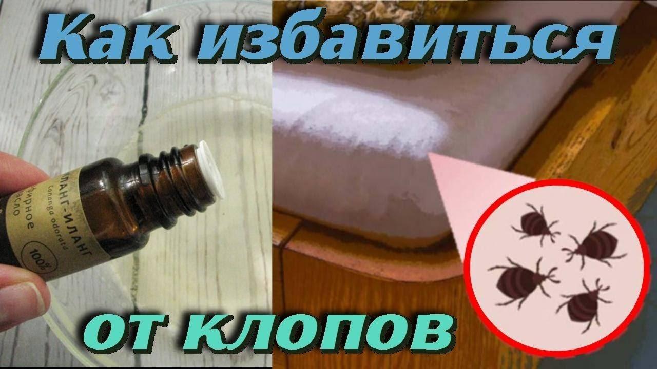 Как размножаются постельные клопы в квартире