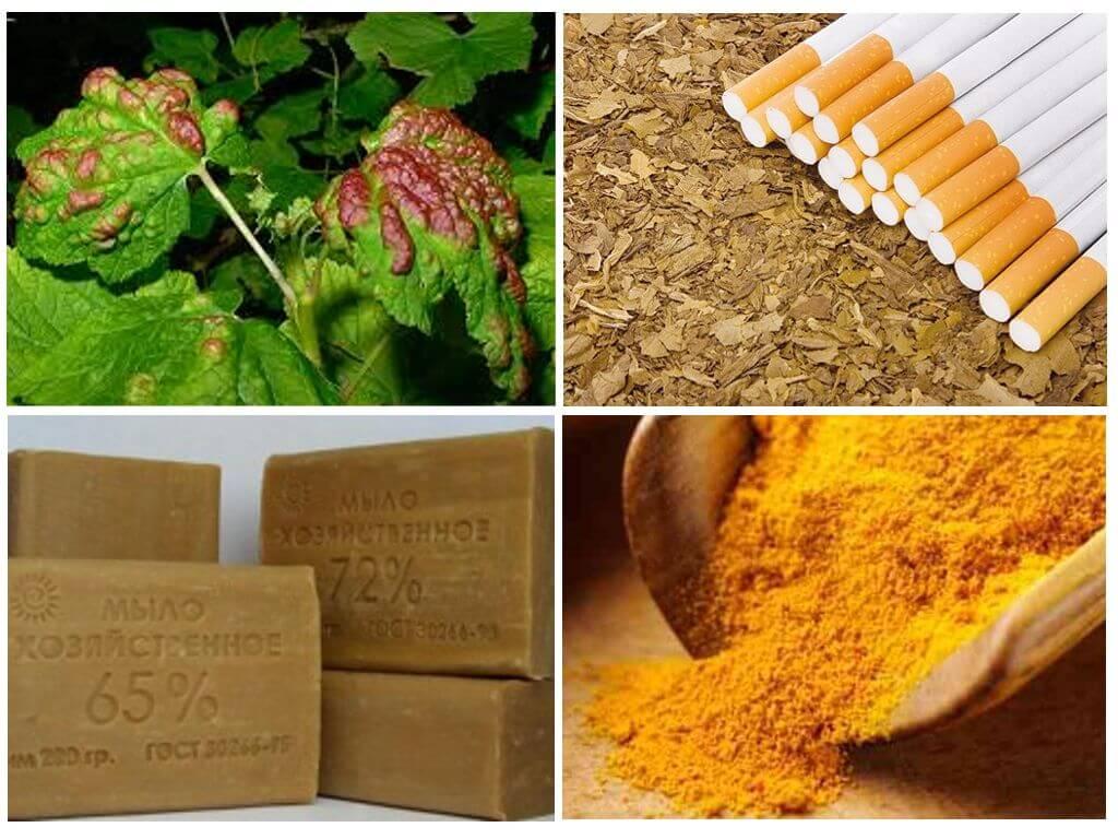 Настой табака для огорода от вредителей настой табака для огорода от вредителей