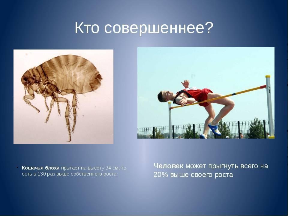 Прыгают ли вши с головы на голову, могут ли летать, плавать и т.д.