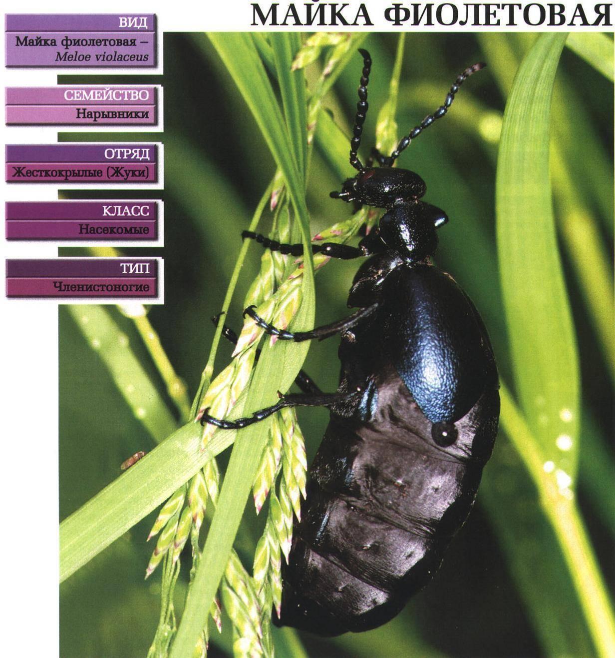 Опасные насекомые на даче | дом, сад и огород