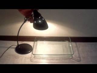 Ловушка для блох в квартире и доме: 9 видов, своими руками и покупные