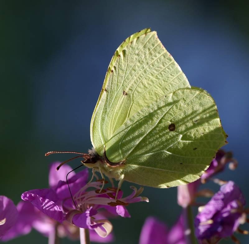 Основные виды дневных бабочек в россии: список, фото, названия, описание и видео