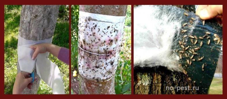 Средства для защиты плодовых деревьев от муравьев