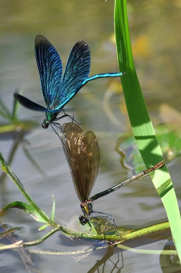 Какие животные являются природными чистильщиками водоемов нашей страны