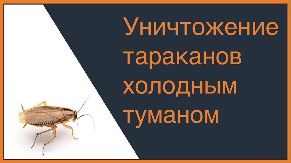 Уничтожение тараканов холодным и горячим туманом (отзывы)
