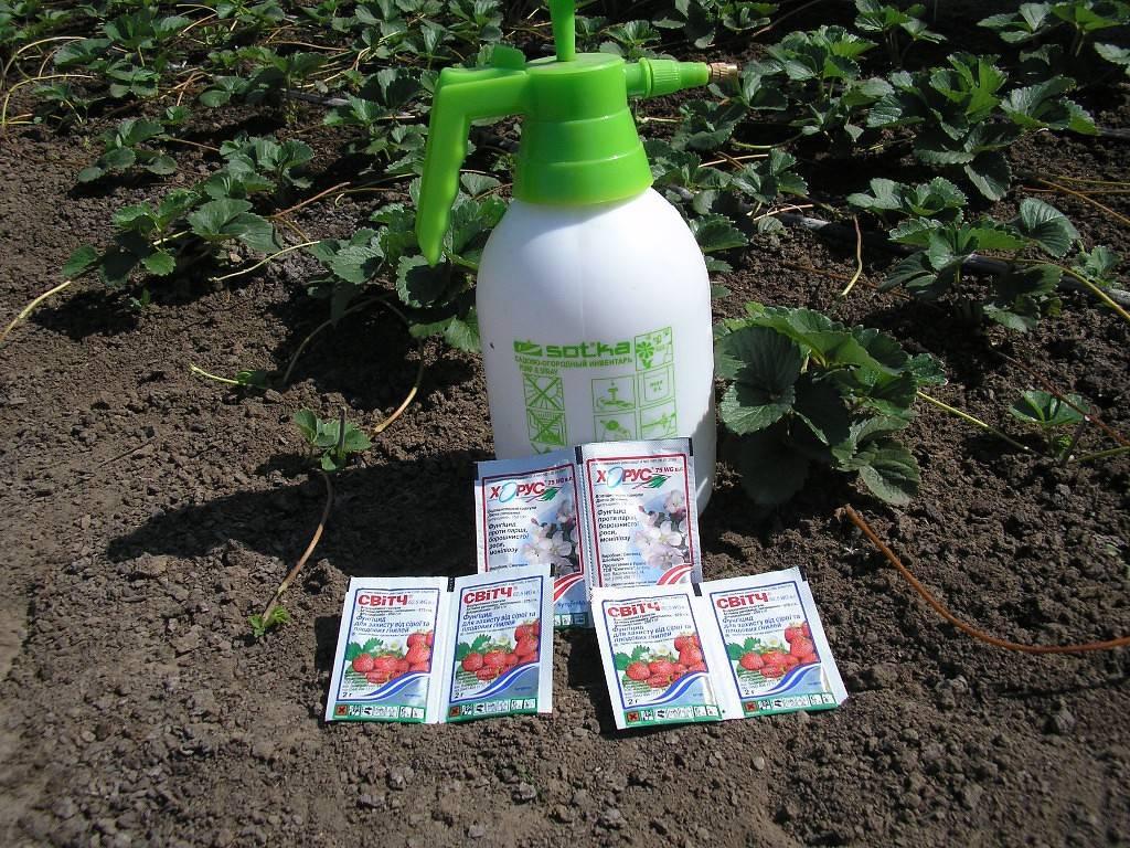 Чем обработать клубнику от вредителей во время цветения и плодоношения