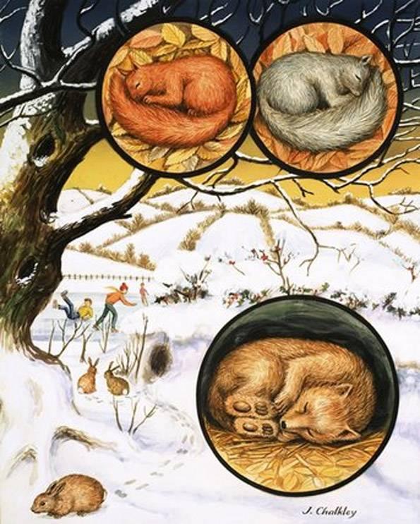 Жизнь ежей зимой. как и где зимуют ежи в природе