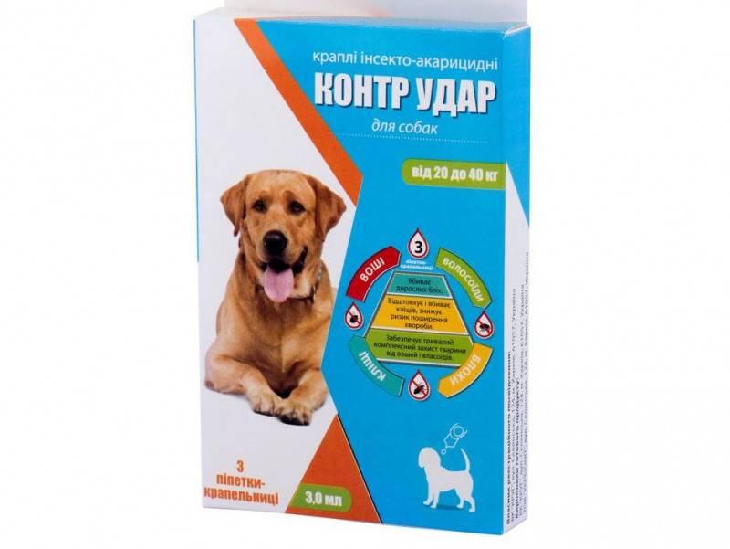 Прививки от клещей для собак