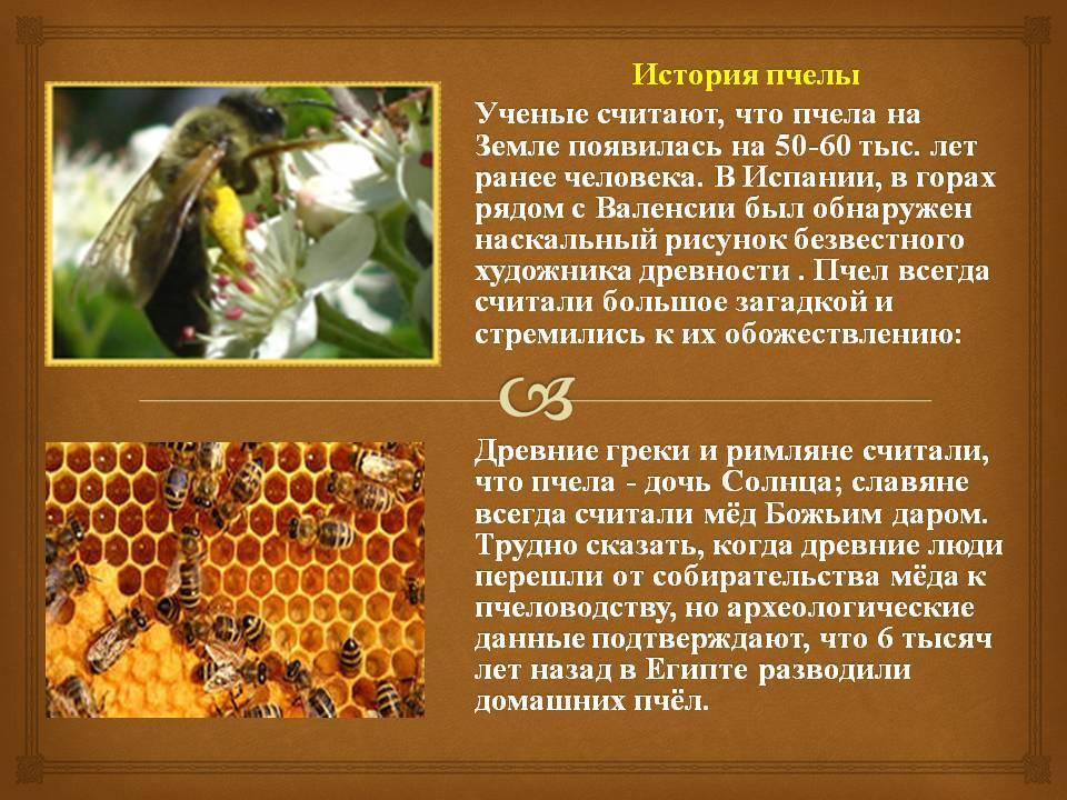 Породы пчел и характеристика видов пчел в россии, какие лучшие