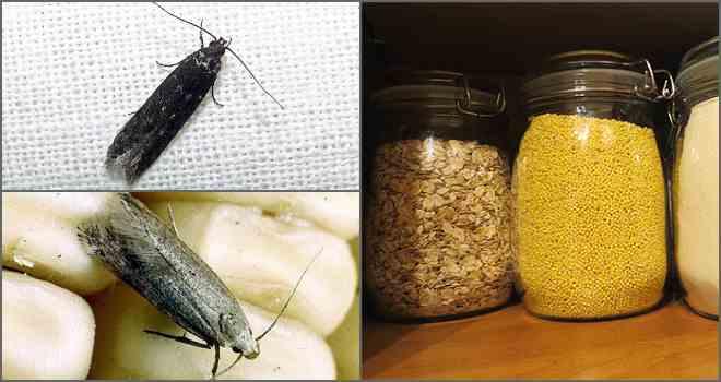 Чего боится моль и её личинки? / как избавится от насекомых в квартире